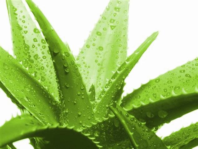 L'Aloe per lenire le irritazioni della bocca