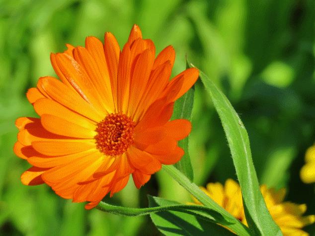 Un fiore d'inverno